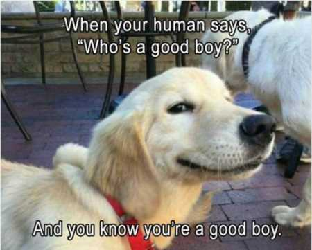 VERY Funny Animal Pictures 017