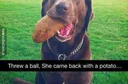 Absolutely Hilarious Animal Pictures 318