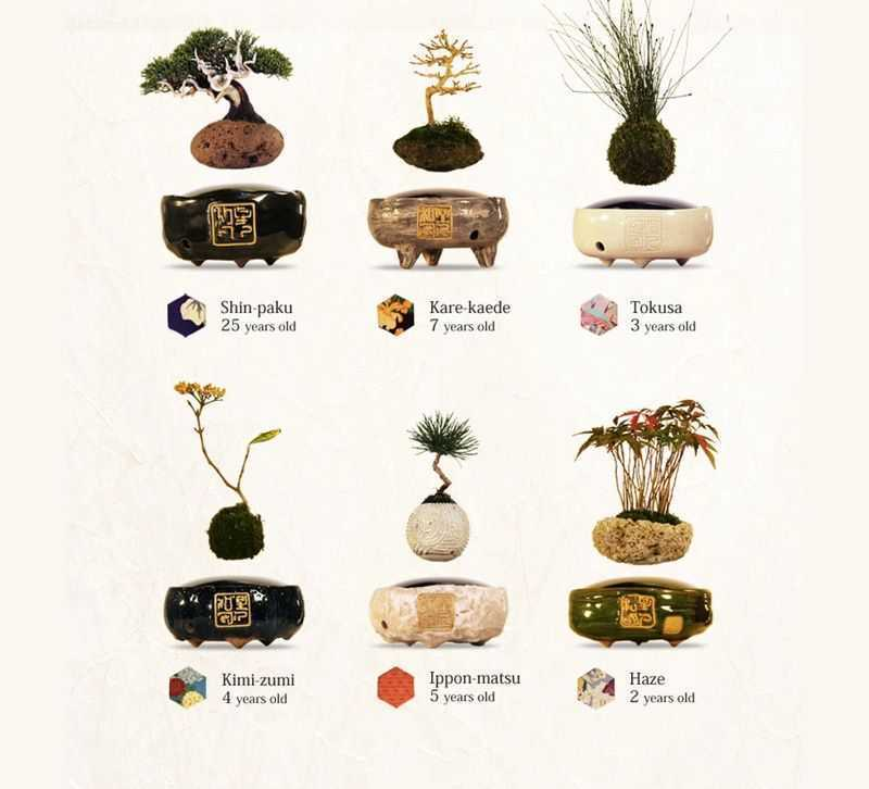 Simple price reference chart for air Bonsai levitating plant pot