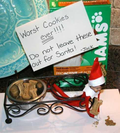 elf on a shelf - took dog cookies for Santa