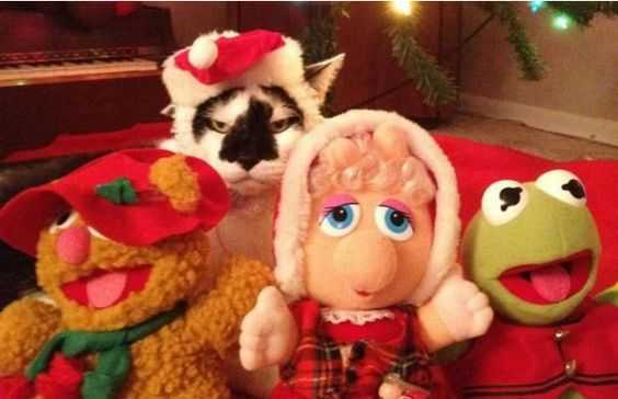 funny christmas cat pictures muppet show cat