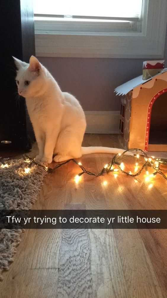 funny christmas cat pictures cat taking down christmas lights
