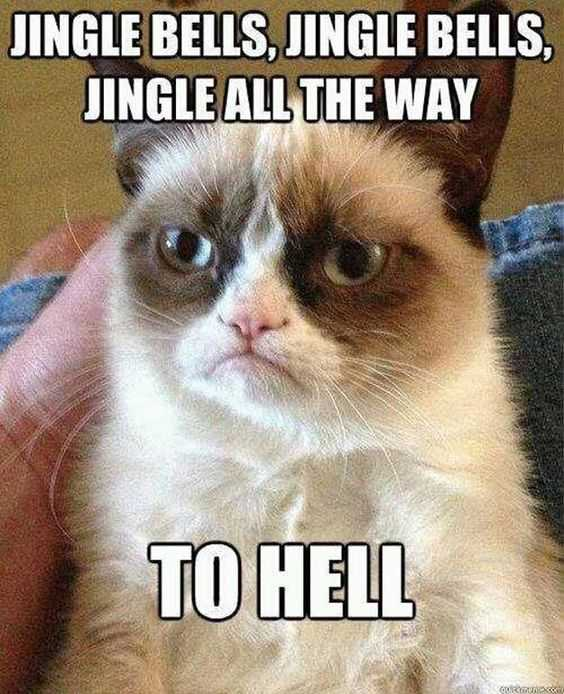 funny christmas cat pictures jingle bells