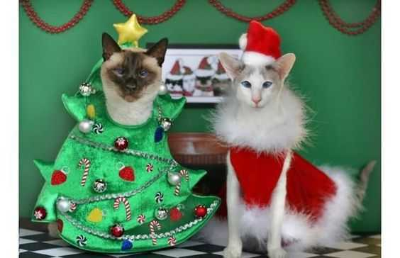 funny christmas cat pictures happy elves