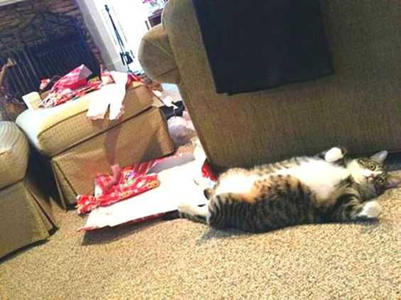 funny christmas cat pictures fat cat