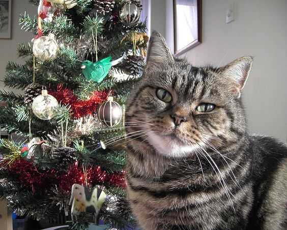 funny christmas cat pictures no presents for cat