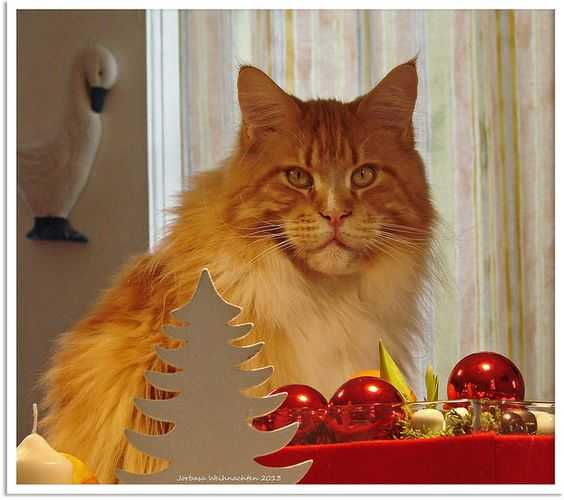 funny christmas cat pictures