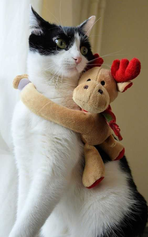 funny christmas cat pictures moose hug