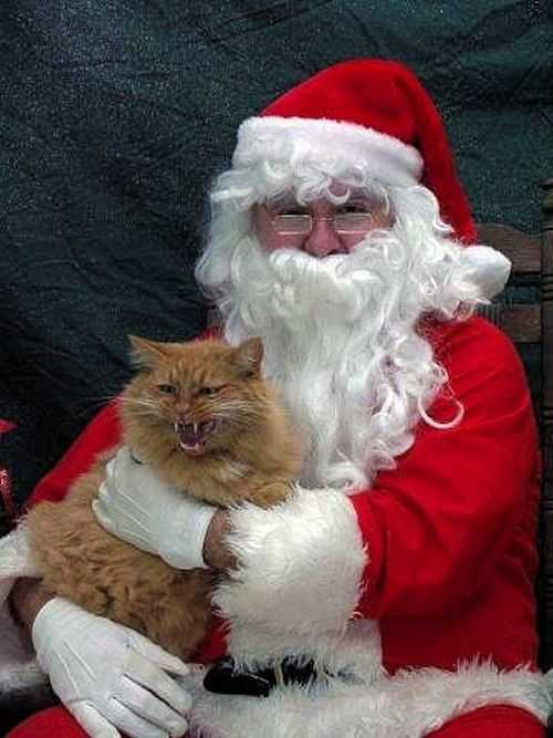funny christmas cat pictures cat hissing in Santa's arm