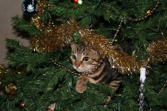 funny christmas cat pictures cat in Christmas tree