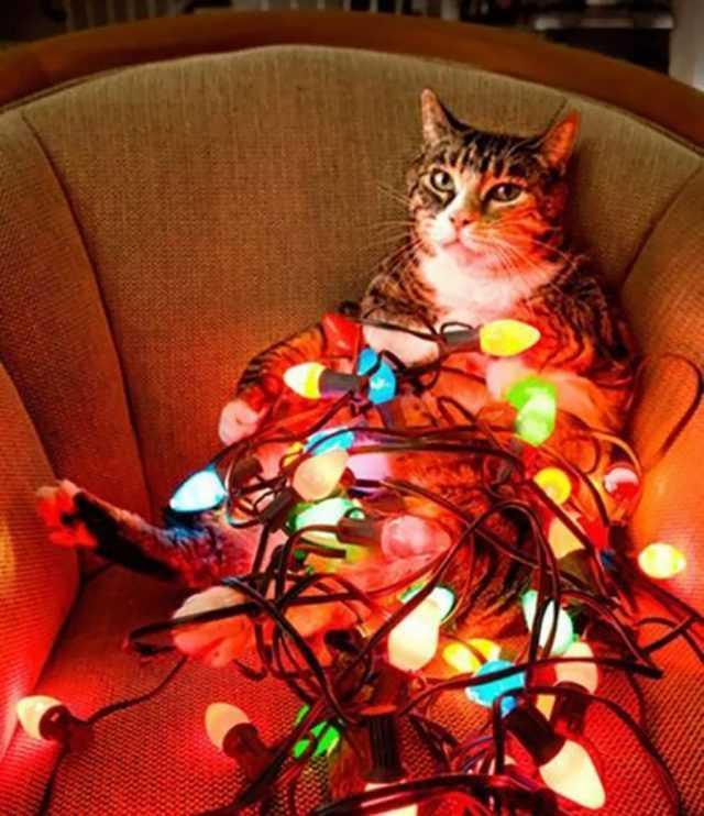 funny christmas cat pictures cat lit up