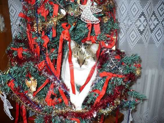 funny christmas cat pictures cat in christmas tree not happy