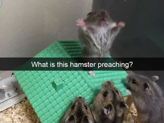 Funny Images preachy hamster