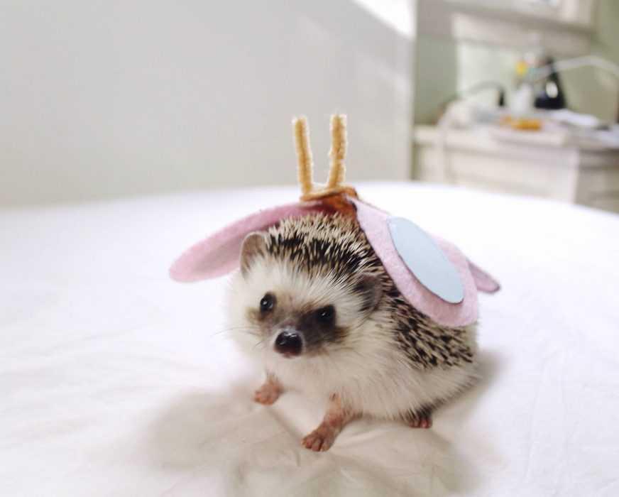 cute hedgehog pictures - hedgehog butterfly