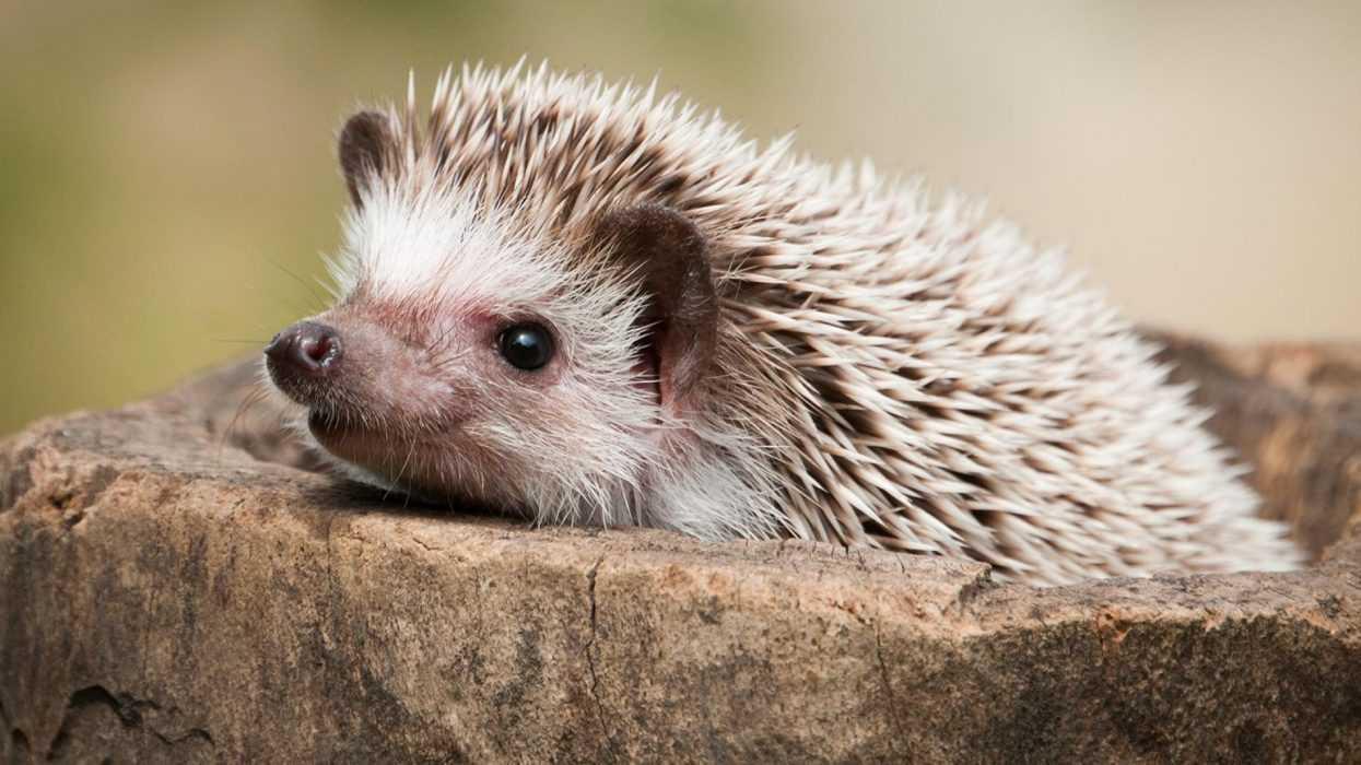 cute hedgehog pictures - hedgehog in stone