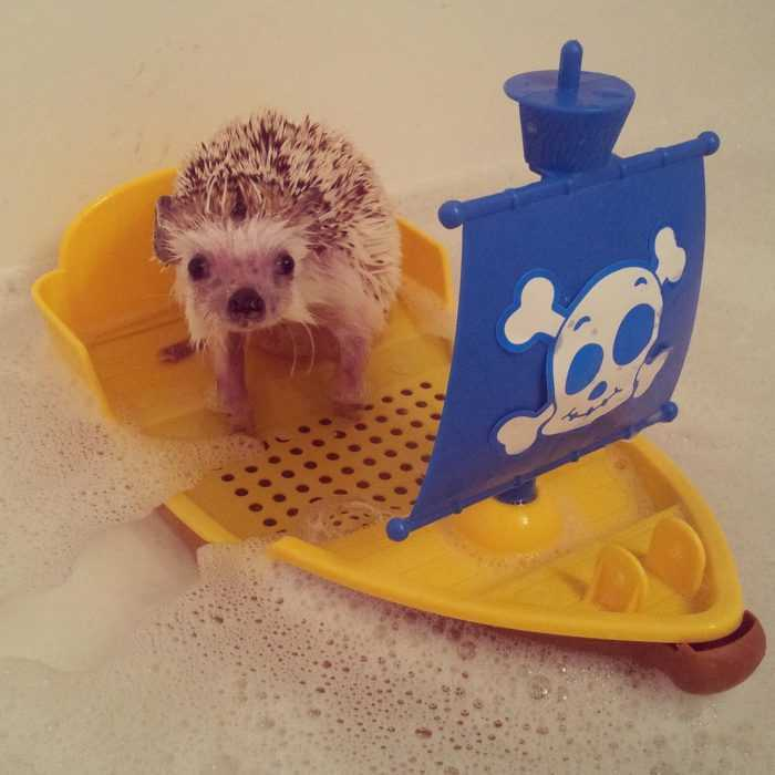 cute hedgehog pictures - hedgehog bath time on a toy boat