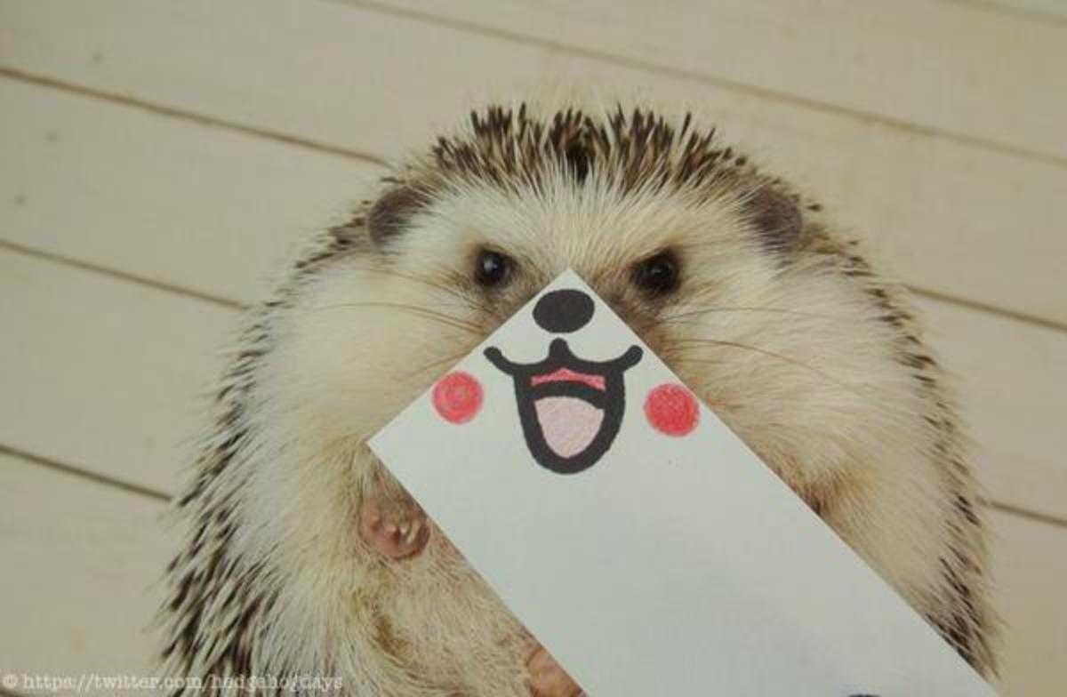 cute hedgehog pictures - hedgehog smile