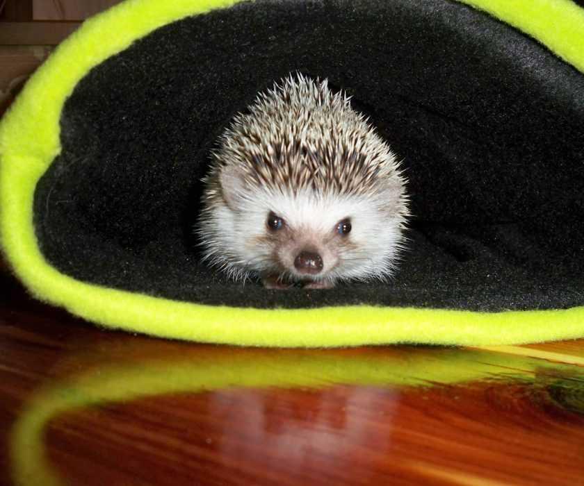 cute hedgehog pictures - hedgehog in a glove