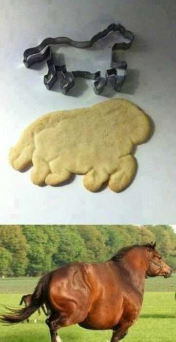 Funny Images fat is the new thin for cookies too