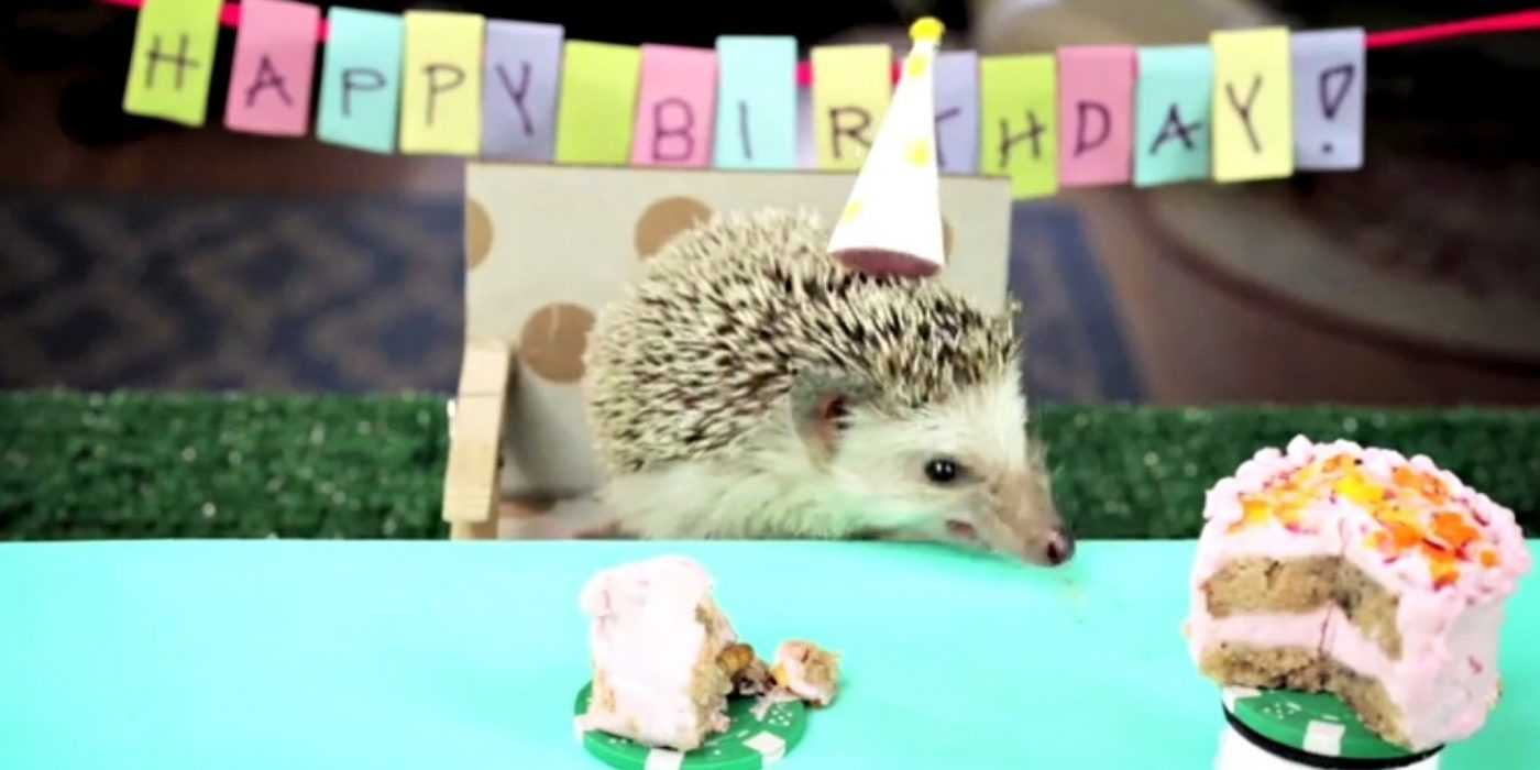 cute hedgehog pictures - hedgehog birthday party