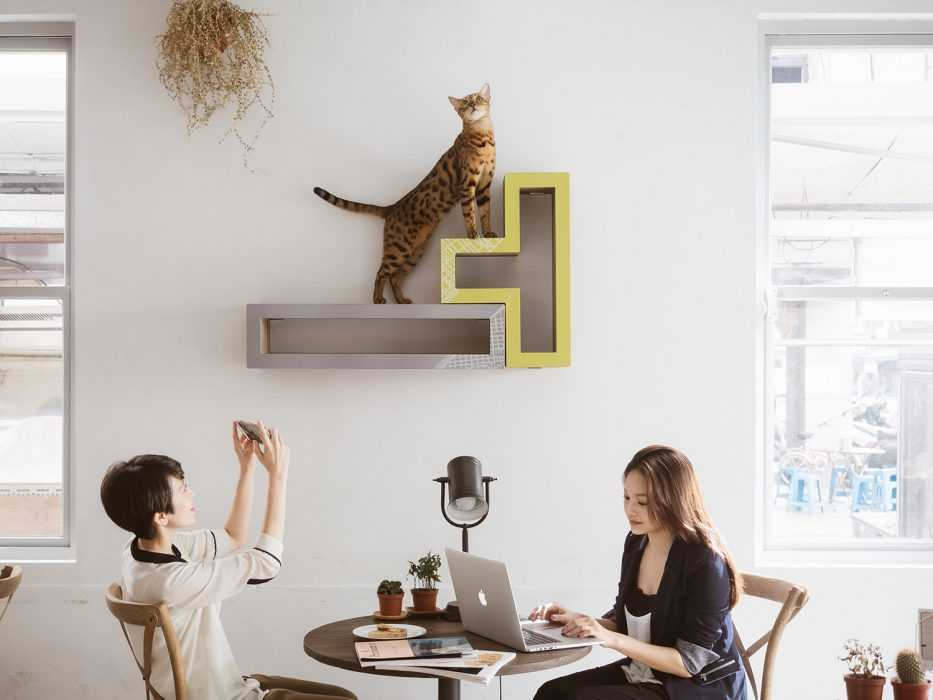 Katris Modular Cat Tree on Wall