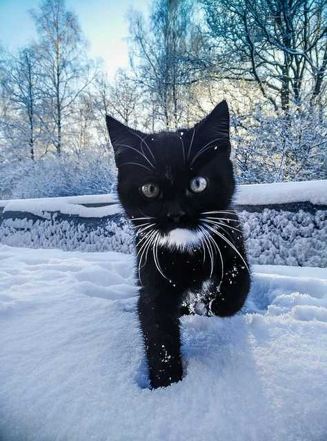 adorable animal pics - mighty panther in white