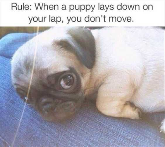 adorable animal pictures with captions - stay