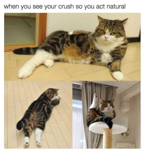 Funny Dank Memes - acting natural