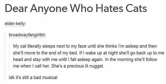 Hilarious Tumblr Posts 9 - cat musical