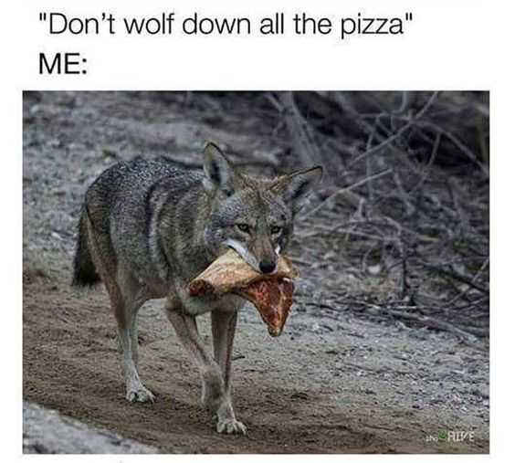 Hilarious Tumblr Pictures - wolf pizza