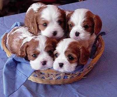 adorable dogs - animal in a basket
