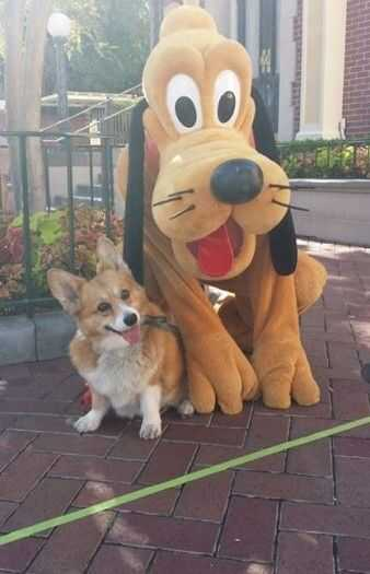 adorable dogs - corgi