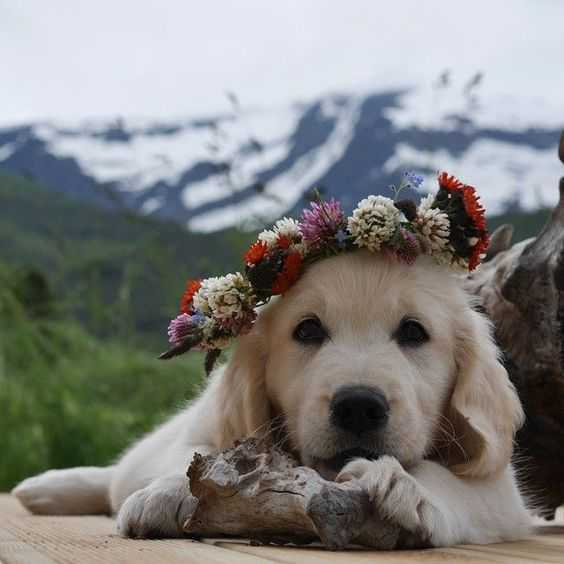 adorable dogs - dog flowers