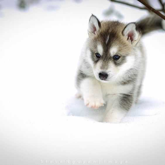 adorable dogs - dog in snow