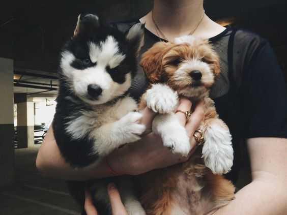 adorable dogs - 2 dogs