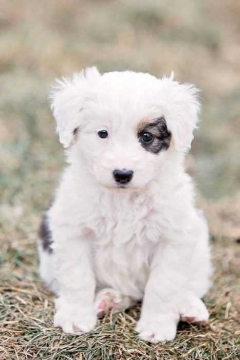 adorable dogs - white dog