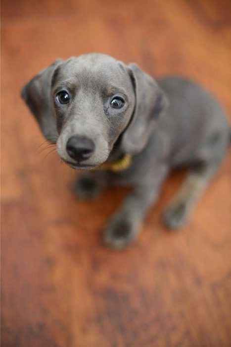 adorable dogs - grey dog