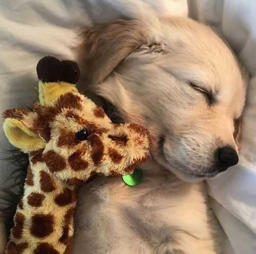 adorable dogs - snuggly animal