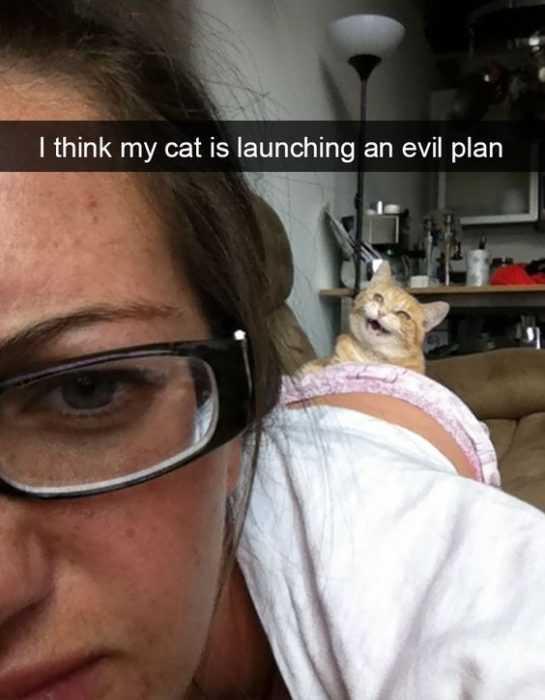 Funny Images Clean - evil cat plan