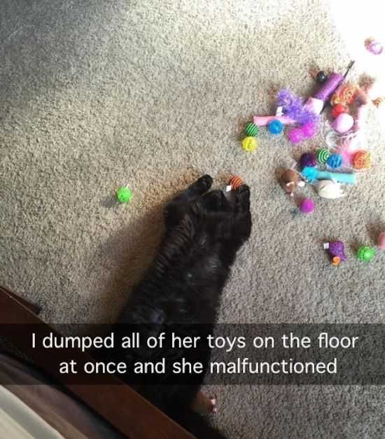 Funny Images Clean - cat malfunction