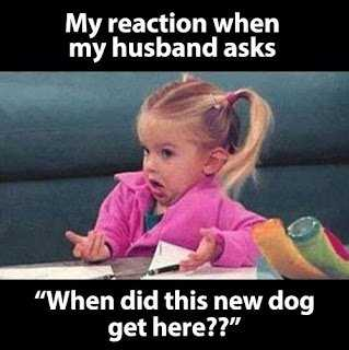 Hilarious Marriage Meme - new dogs