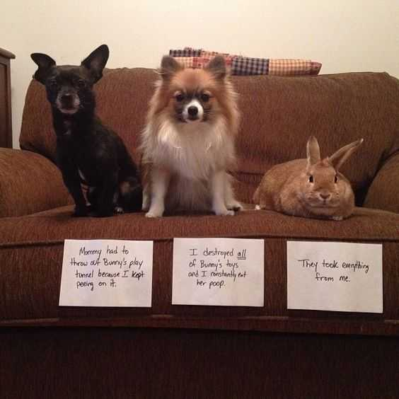 dog shaming - pet shaming and even rabbit shaming.