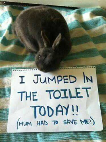 bunny shaming - jumped in toilet