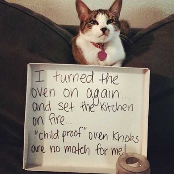 cat shaming pics - turned oven on and set fire to kitchen