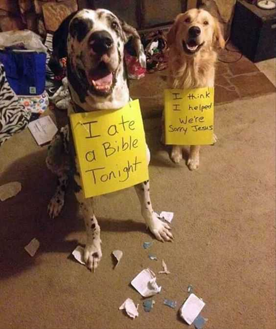 dog shaming - bible bashers