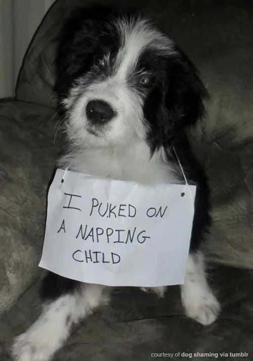 dog shaming - barfed on napping child