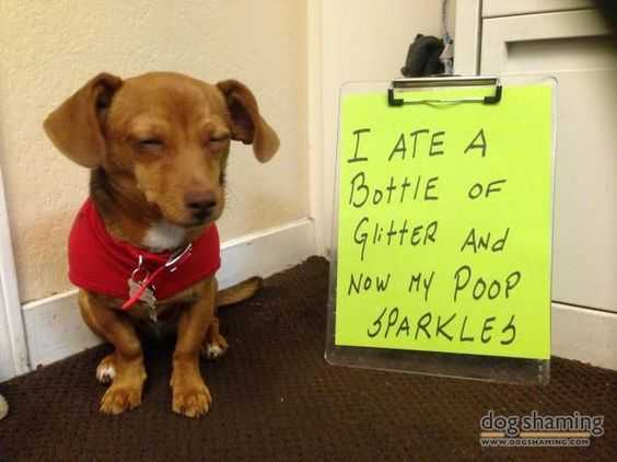 dog shaming - sparkly poop after eating glitter
