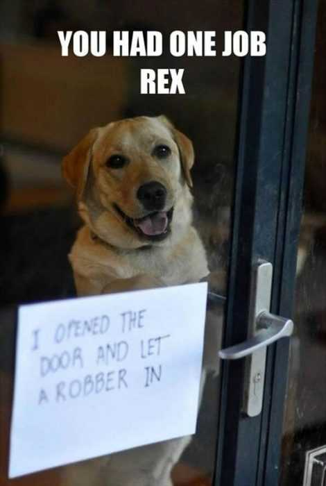 dog shaming - let robber in