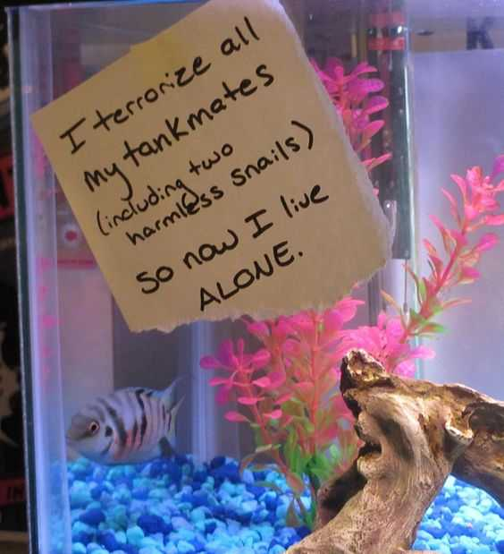 fish shaming - that's a first