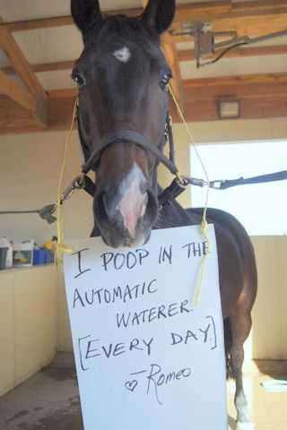 horse shaming pics - poop in automatic waterer